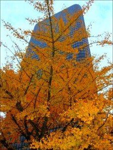 L Shaman autumn day