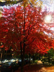 1012-fall-color-explosion-vanessa-feliciano-ed