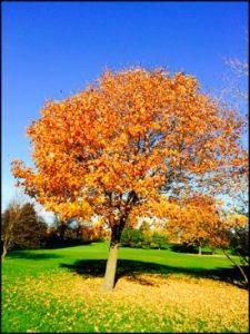 4502-tree-and-leaves-carol-erlbach-ed