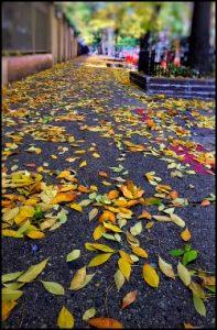 914-leafy-sidewalk-donald-jeske-ed